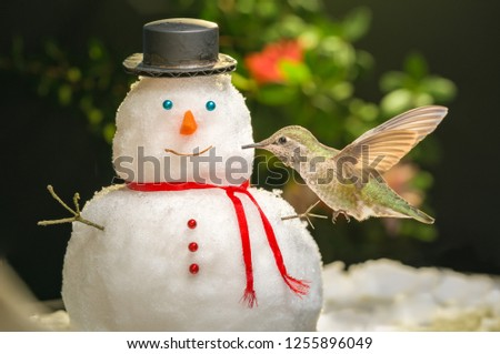 Hummingbird visits a mini snowman; kissing; happy; lovely; childhood; holiday inspiration; bird watching activity. #1255896049