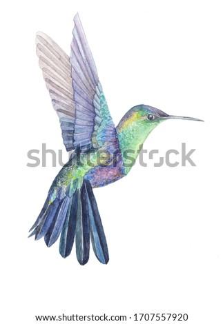Hummingbird watercolor drawing. Bright multicolor small tropical bird. Hummingbird with bright plumage. Flying bird Stock photo ©