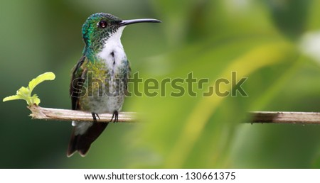 Hummingbird with copy space