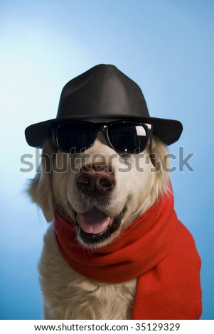 humor image of a dog with hat, red scarf and sunglasses, as a playboy