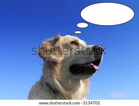 humor photo of a cream golden retriever dog with balloons as if thinking
