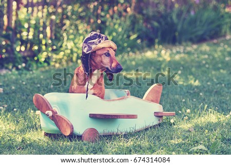 humorous Brown dog flying on wooden airplane