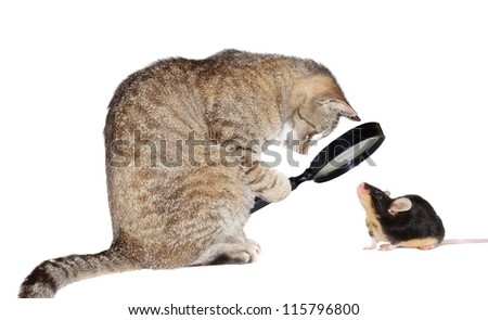 Humorous conceptual image of a nearsighted cat with myopia peering at a little mouse through a magnifying glass isolated on white