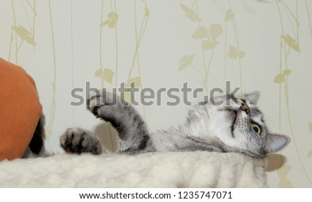 Humorous photo of playing naughty cat. Playing cat isolated in natural background.
