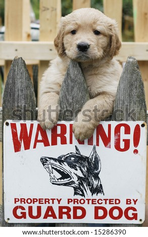 humorous picture with golden retriever puppy above guard dog sign