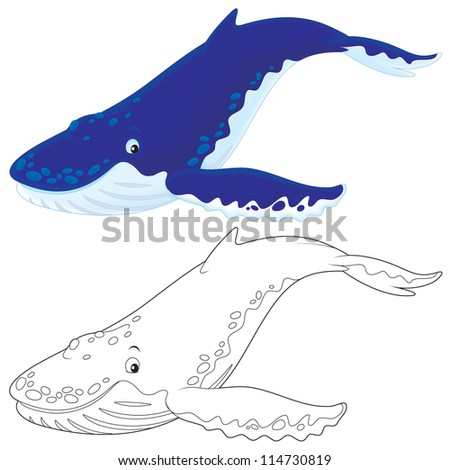 Hump-backed whale - stock photo
