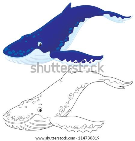 Hump-backed whale