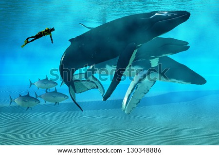 Humpback Dive - A diver swims with a pod of Humpback whales as three tuna cruise by.