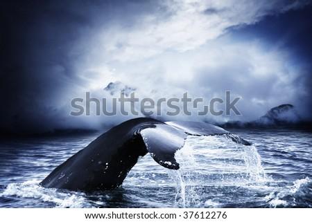 humpback whale deep diving
