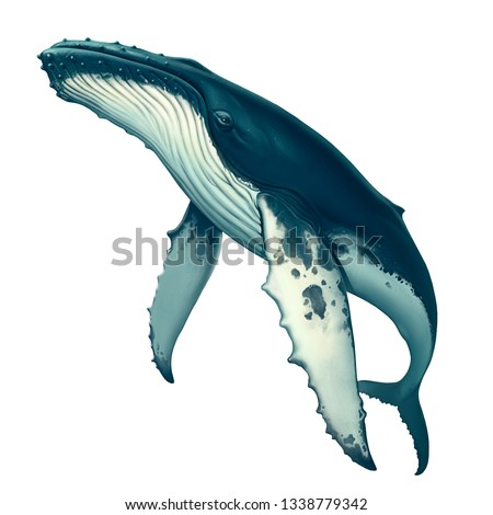 Humpback whale realistic illustration isolated. Big gray whale on a white background. Blue whale in the open sea swims to the top