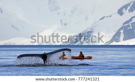 Humpback whale tail with kayak, boat or ship, showing on the dive, Antarctic Peninsula, Antarctica