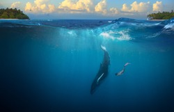 Humpback Whale underwater girl diving in tropical water background
