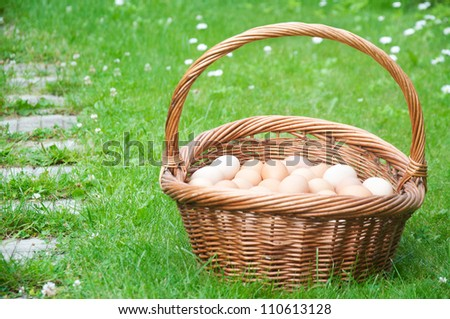 Hundred eggs in the basket on the grass