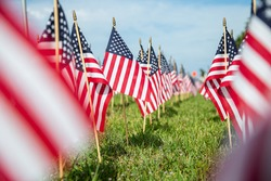 Hundreds of American flags planted on the lawn