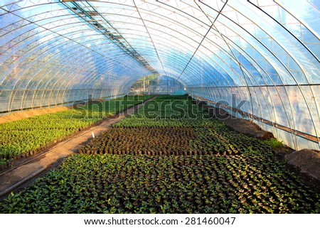 Hundreds of green saplings in a greenhouse