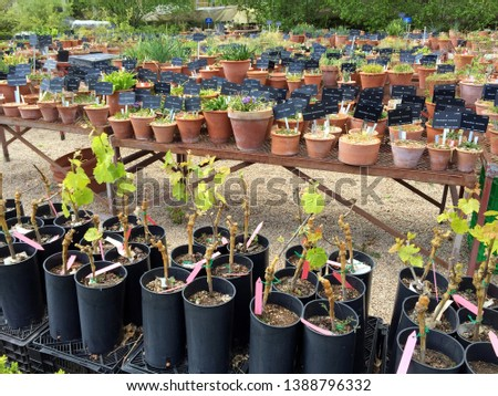 Hundreds of plants in labeled pots hardening outdoors before being planted at the Royal Botanical Garden of Madrid. #1388796332