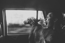 Hungarian vizsla dog and young man, traveling in the car, black and white photo