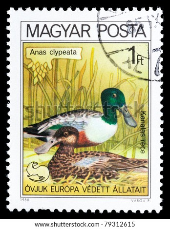 HUNGARY - CIRCA 1980: A post stamp printed in Hungary shows image Anas clypeata, circa 1980
