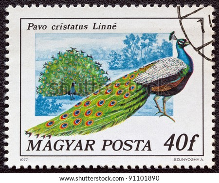"HUNGARY - CIRCA 1977: A stamp printed in Hungary from the ""birds"" issue shows a Peacock, circa 1977."