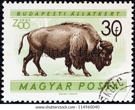 """HUNGARY - CIRCA 1961: A stamp printed in Hungary from the """"Budapest Zoo Animals"""" issue shows an American bison (Bison bison), circa 1961."""