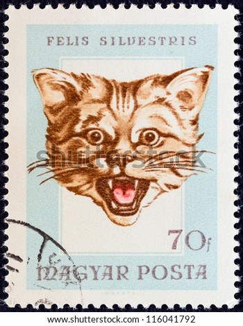 "HUNGARY - CIRCA 1966: A stamp printed in Hungary from the ""Hunting Trophies"" issue shows a wildcat (Felis silvestris), circa 1966."