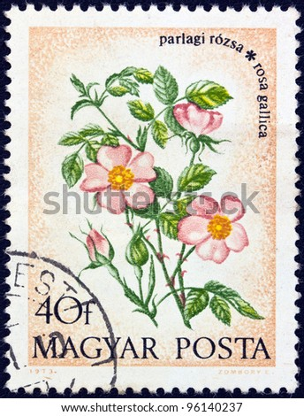 "HUNGARY - CIRCA 1973: A stamp printed in Hungary from the ""Wild Flowers"" issue, shows a French Rose, circa 1973."