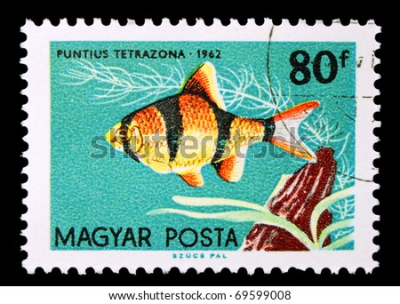 HUNGARY - CIRCA 1962: A stamp printed in Hungary showing Tiger Barb, circa 1962