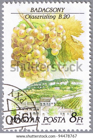 HUNGARY - CIRCA 1990: A stamp printed in Hungary shows Italian Riesling, series is devoted to grapes, circa 1990