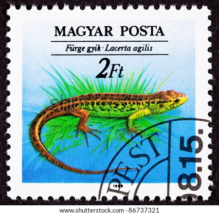 HUNGARY - CIRCA 1989:  A stamp printed in Hungary shows the Brown Green Sand Lizard, Lacerta agilis, circa 1989. - stock photo