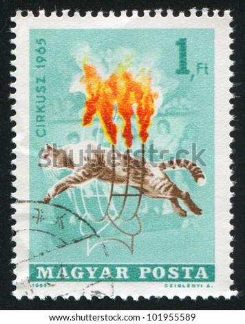 HUNGARY �¢?? CIRCA 1965: stamp printed by Hungary, shows Wild cat jumping through burning hoops, circa 1965