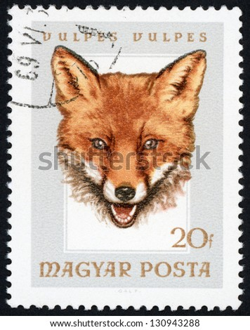 HUNGARY - CIRCA 1966: stamp printed in Hungary (Magyar) shows european red fox (vulpes vulpes); hunting trophies - animals in natural colors series, Scott catalog 1780 A383 20f gray brown, circa 1966