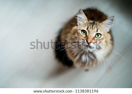 Hungry cat with green eyes looking and waiting for food