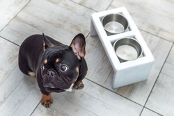 Hungry dog sitting by an empty bowl on the kitchen floor