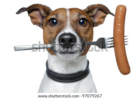 hungry dog with a sausage on the fork #97079267