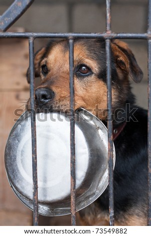 Hungry dog with bowl locked in the cage - stock photo