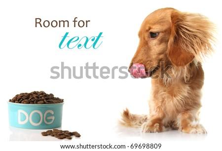Hungry dog with dog food.