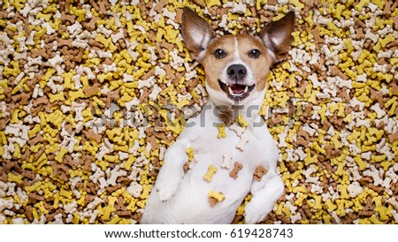 hungry jack russell dog inside a big mound or cluster of food , isolated on mountain of cookie bone  treats as background #619428743