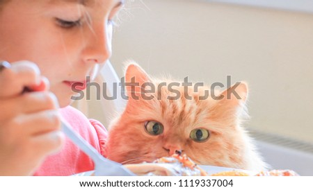 hungry red cat carefully watches as his hostess eats chicken and waits for a treat #1119337004