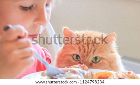 hungry red cat carefully watches as his hostess eats chicken and waits for a treat #1124798234