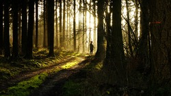 Hunt in the south of Belgium; hunter through the trees and the morning sunlight