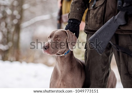 hunter and his weimaraner dog by a river in the winter hunting season. hunt concept. #1049773151