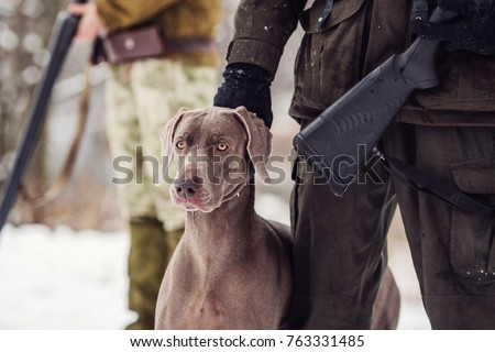 hunter and his weimaraner dog by a river in the winter hunting season. hunt concept. #763331485