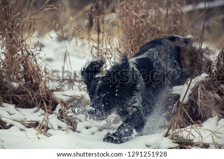 Hunter dog. Hunting dog. Hunting with a dog. Russian hunting spaniel. #1291251928