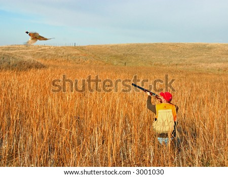 hunter taking aim at rooster pheasant