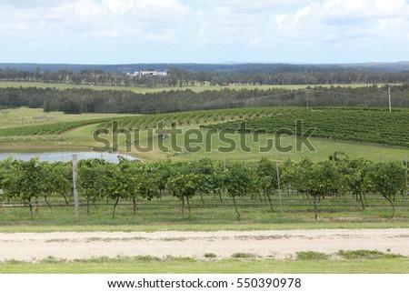 Hunter Valley, NSW Australia #550390978