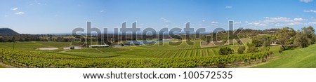 Hunter Valley, Vineyards on hillside Panorama, NSW Australi