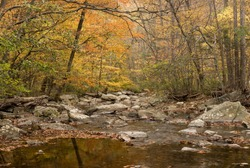 Hunting Creek flows through a forest in the Catoctin Mountain Park in Maryland during the fall season.