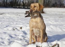 Hunting dog caught bird