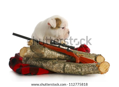 hunting dog - english bulldog puppy sitting behind wooden logs with shotgun