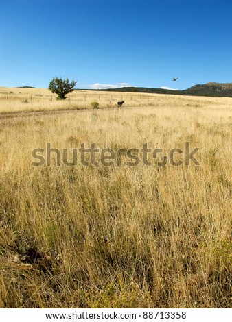 Hunting Dog in the Field